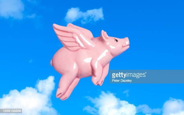 pigs might fly - irony stock pictures, royalty-free photos & images