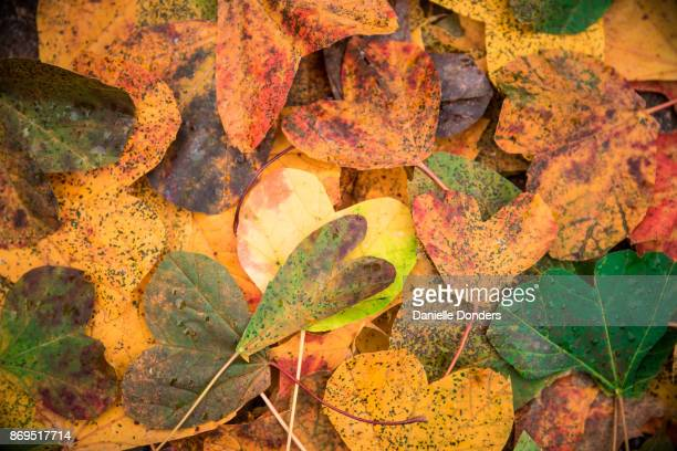 Pile of autumn leaves cut into heart shapes