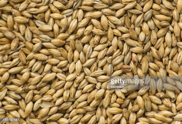 A pile of barley as a background