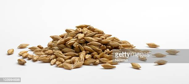 pile of barley - cereal plant stock pictures, royalty-free photos & images