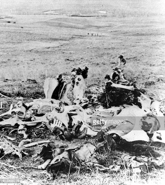 A pile of bones is all that remains on the battlefield of Little Big Horn in 1877 from this scene of Gen Custer's last stand looking in the direction...