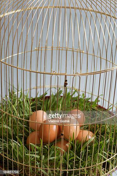 A pile of brown eggs lying on grass in a birdcage