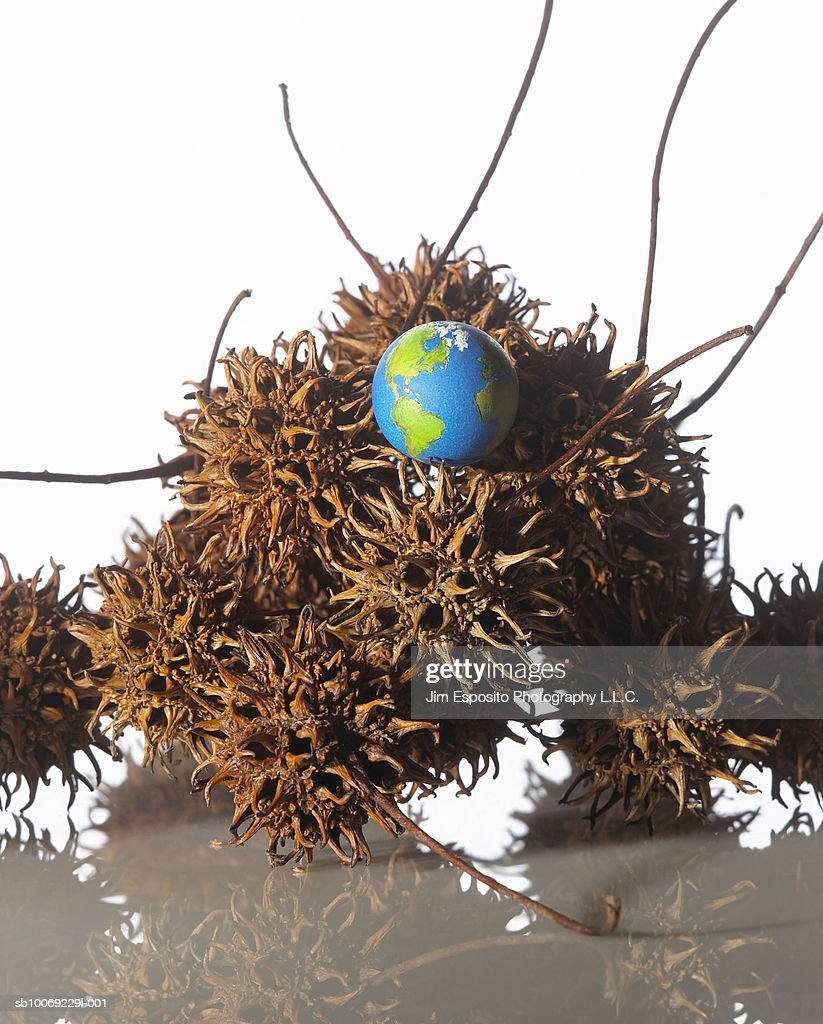 Pile of chestnut burs with globe on top, studio shot : Stockfoto
