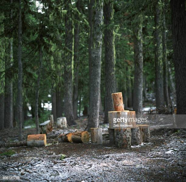 Pile of chopped firewood in the forest