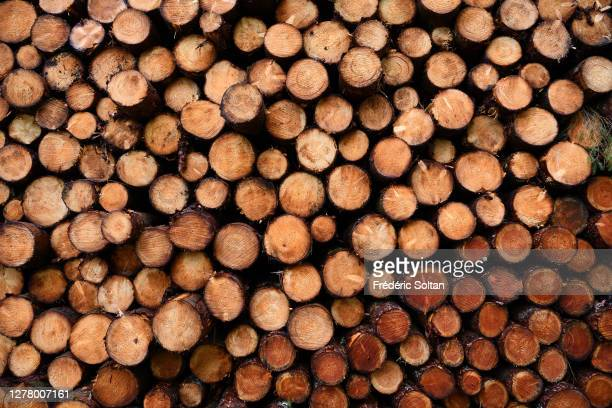 Pile of Chopped Wood Logs Stacking Full Frame Shot in the Dordogne valley in Correze on May 10, 2020 in Correze, France. .