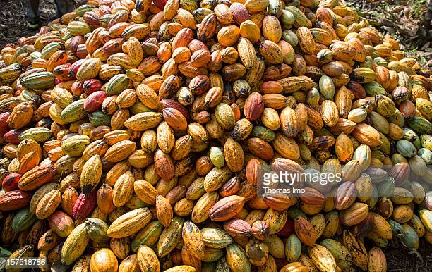 A pile of cocoa pods at a cocoa plantation on October 30 2012 in Mondoni Cameroon