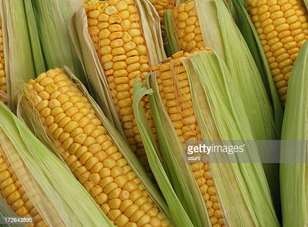 Pile of corn on cob with top cut off