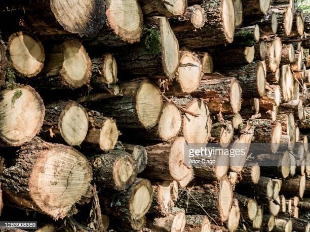 pile of cut pine tree trunks. - stamm stock-fotos und bilder