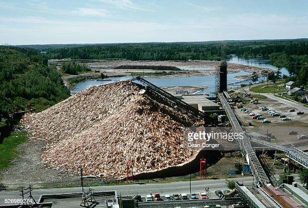 Pile of Debarked Logs at Paper Mill