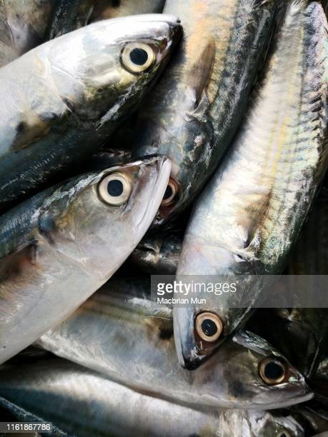 a pile of fresh fish in a market - fatty acid stock pictures, royalty-free photos & images