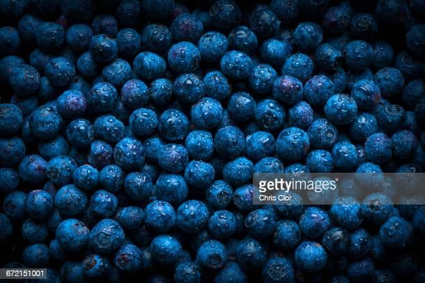 pile of fresh wet blueberries - ブルーベリー ストックフォトと画像