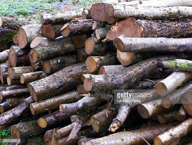 pile of freshly chopped logs in woods - lyn holly coorg stock pictures, royalty-free photos & images