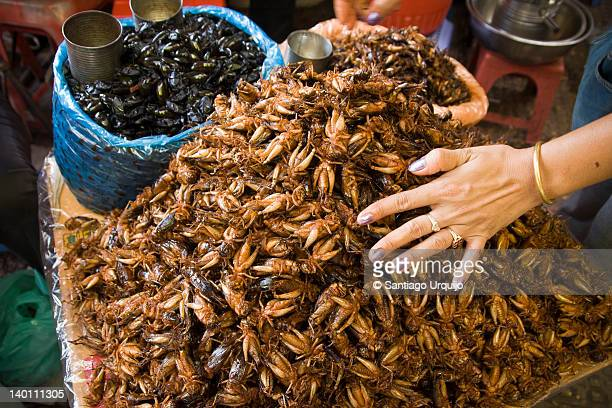Pile of fried crickets for sale