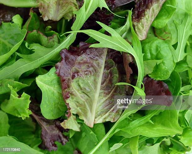A pile of green and purple leaves like lettuce and arugula