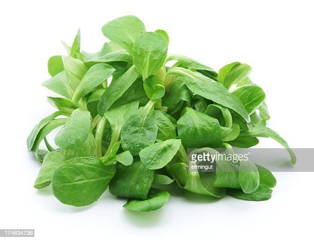 mâche isolé sur blanc - lettuce photos et images de collection