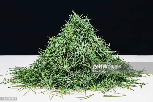 pile of green pine needles (shore pine), close up - agulha parte de planta imagens e fotografias de stock