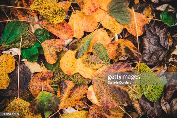 Pile of heart-shaped autumn leaves