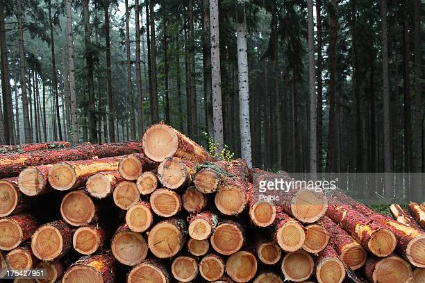 pile of larch logs