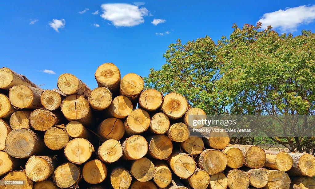 Pile of logs from poplars in La Vega valley in Granada, Andalusia, Spain : Foto de stock