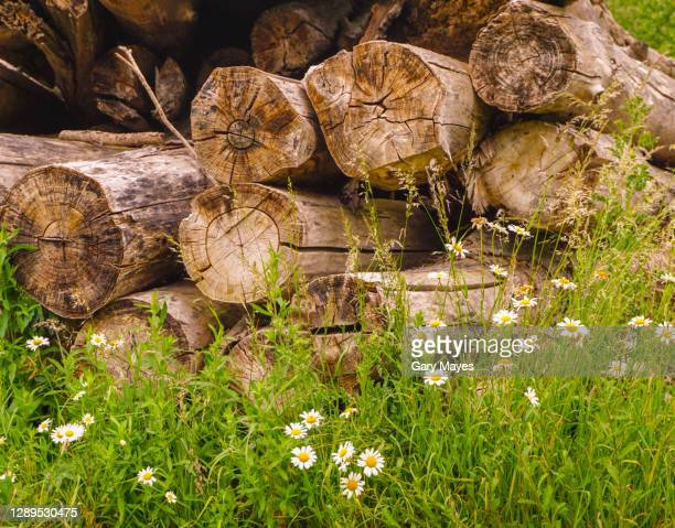 pile of logs - heap stock pictures, royalty-free photos & images