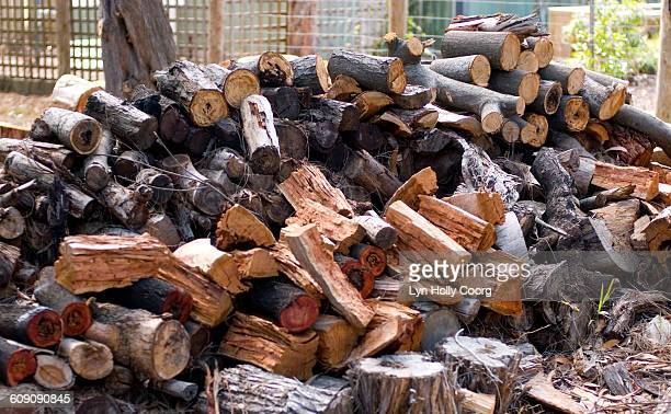 pile of logs - lyn holly coorg stock-fotos und bilder