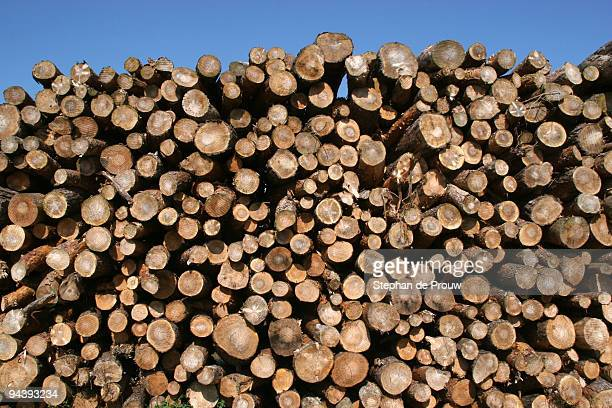 pile of logs - stephan de prouw stock pictures, royalty-free photos & images
