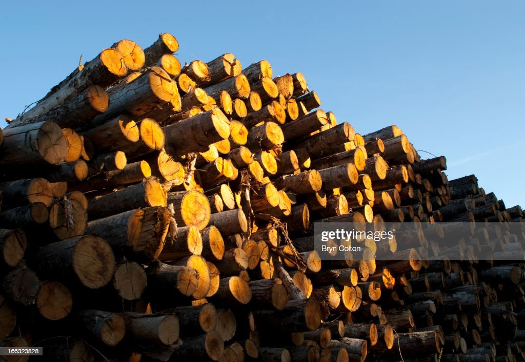A pile of newly felled timber logs is seen in the evening sunlight as they sit stacked in a pile in the countryside near Mouchamps, Vendee, in France, on Wednesday, August 23, 2006.