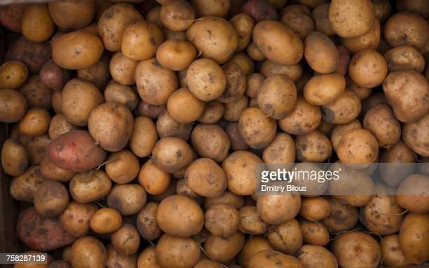 pile of potatoes - rauwe aardappel stockfoto's en -beelden