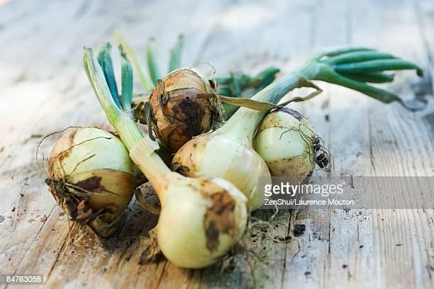 pile of recently uprooted onions - blumenzwiebel stock-fotos und bilder