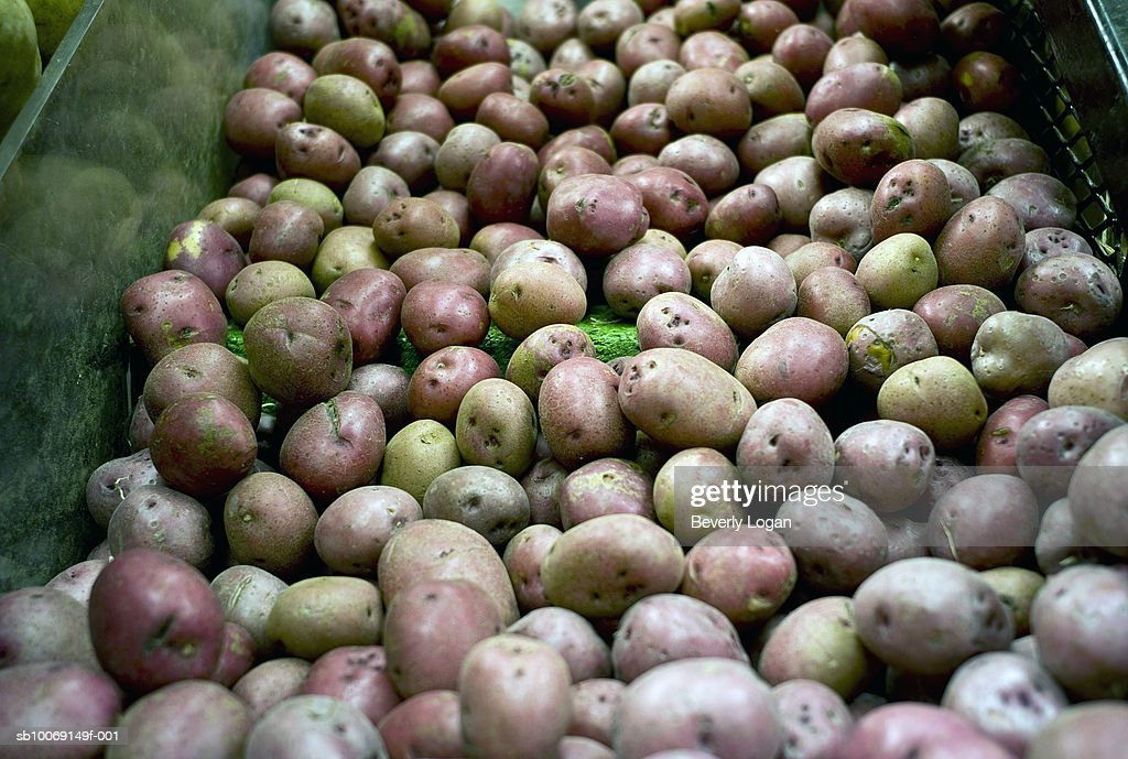 Pile of red potatoes : Stockfoto