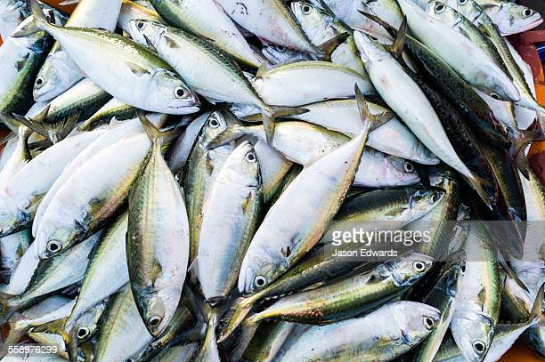 A pile of sardine fish for sale in a tub in a fish market.