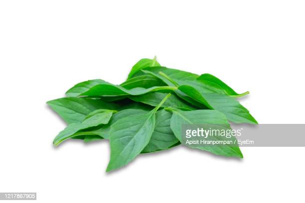 pile of sweet basil leaf isolated on white background. - apisit hiranpornpan stock pictures, royalty-free photos & images