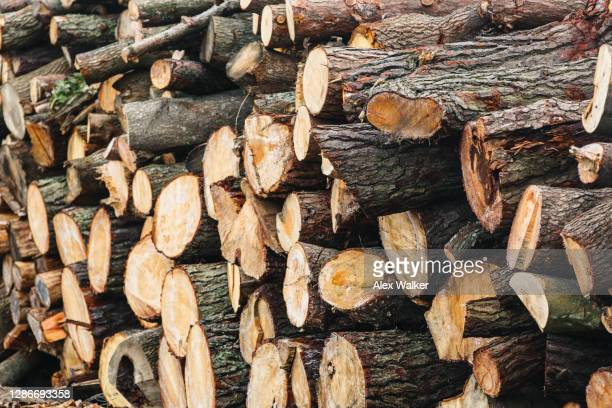 pile of various sized tree trunks - heap stock pictures, royalty-free photos & images