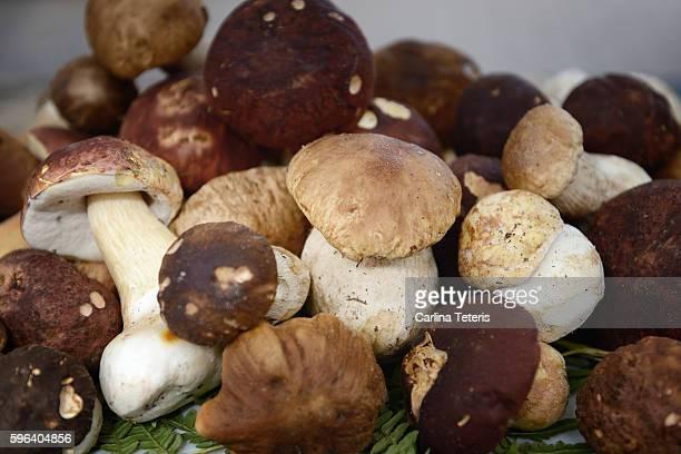 A pile of wild porcini mushrooms