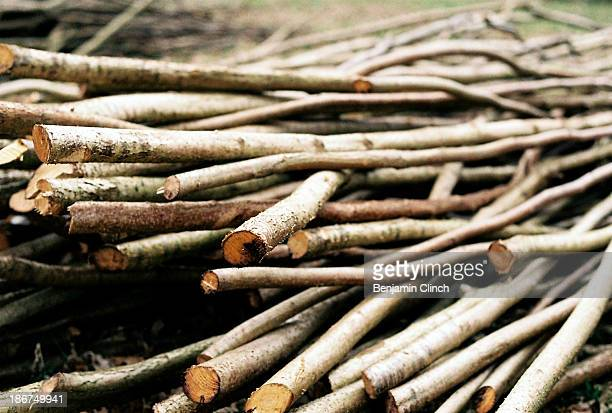 pile of wooden sticks - stick stock-fotos und bilder