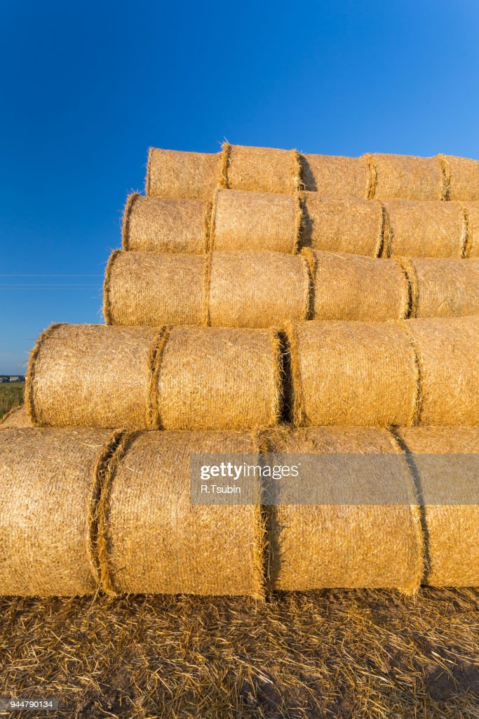 Piled hay bales : Stock Photo