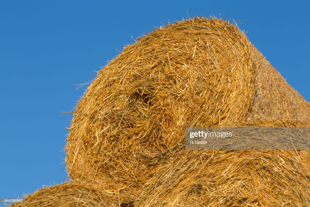 Piled hay bales : Stock Photo