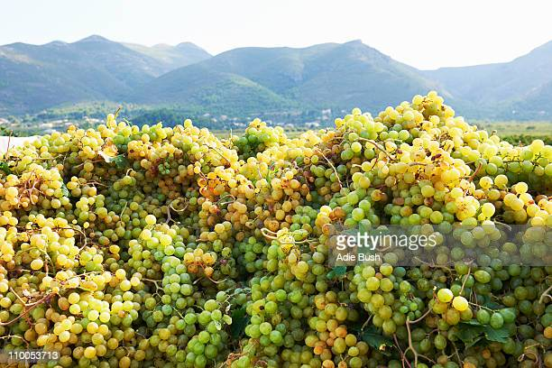 Piles of grapes