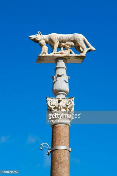 pillar of the she-wolf with romulus and remus in front of the duomo of siena, cattedrale di santa maria assunta, siena, province of siena, tuscany, italy - classical mythology character stock photos and pictures