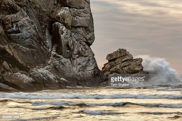 pillar rock, morro bay - tom grubbe stock pictures, royalty-free photos & images