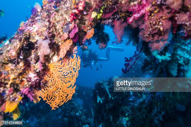 pillars covered with soft coral and a diver in the blue water - biodiversity stock pictures, royalty-free photos & images