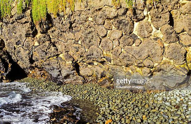 Pillow lava with pale muddy limestone between pillows shows outer rapidly cooled dark glassy layers enclosing grey vesicular basalt Calcite veins...
