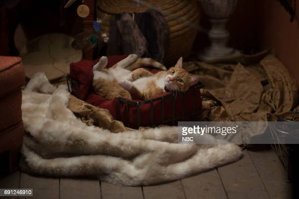 TEXAS 'Pilot' Episode 101 Pictured Cat as Mr Snuggly