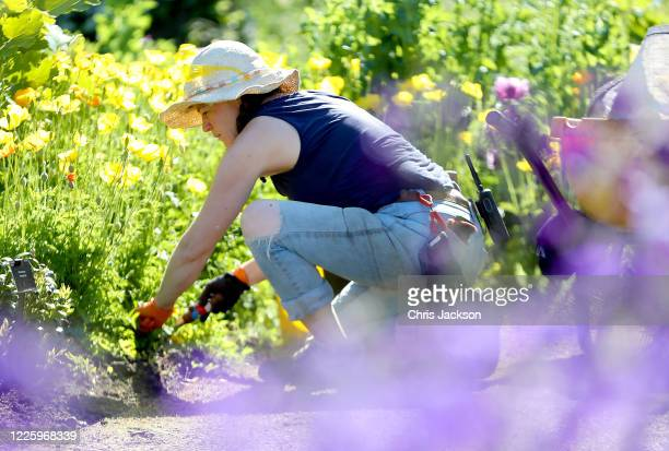 Pin Dix botanical Horticulturst maintains the Evolution Garden during lockdown at The Royal Botanic Gardens at Kew on May 20 2020 in Richmond England...
