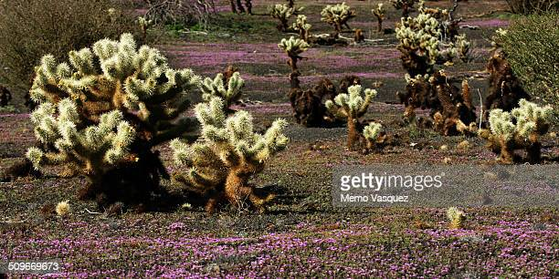Pinacate and Grand Desert Biosphere Reserve