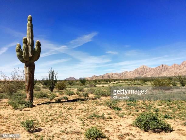 pinacate biosphere, el pinacate - desierto sonorano fotografías e imágenes de stock