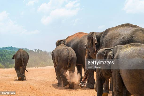 Pinawalla Elephant Orphanage, Pinawalla, Sri Lanka