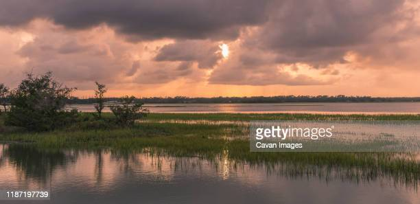 pinckney island natural park - marsh stock pictures, royalty-free photos & images