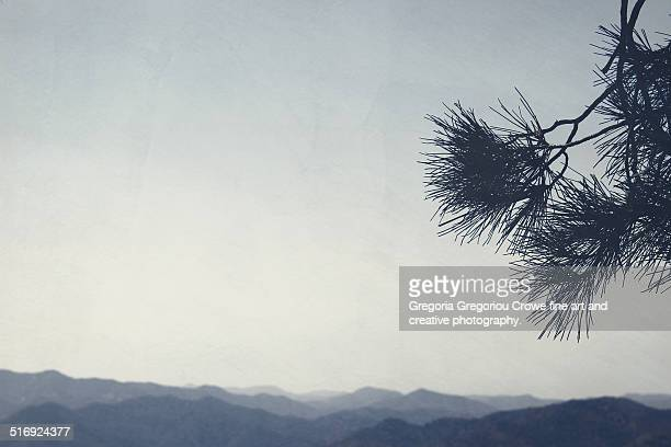 pine and mountains - gregoria gregoriou crowe fine art and creative photography - fotografias e filmes do acervo