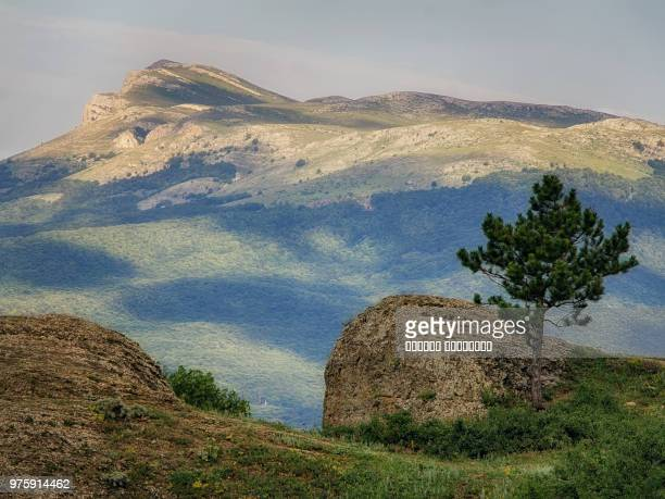 Pine (Pinus) and rocks with forest covered mountain in background, Demerdgi, Chatyr-Dag, Crimea, Ukraine
